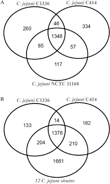 Venn diagrams showing orthologues shared by strains by 1336 and 414 with (A) C. jejuni NCTC11168 only and (B) 12 C. jejuni strains.