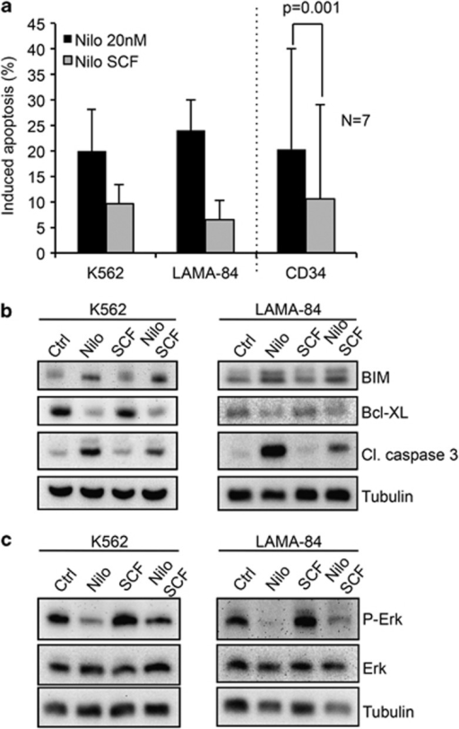 SCF inhibits nilotinib-induced apoptosis independently of BCL-2 family proteins. (a) Apoptosis was measured by flow cytometry using DiOC6(3) as a probe for K562 and LAMA-84 cell lines and FITC-annexin V for CML bone marrow CD34+ cells. Cells were incubated for 24 h in the presence or absence of 100 ng/ml SCF and 20 nM nilotinib. Drug-induced apoptosis was calculated as described in Materials and Methods and corrected for spontaneous apoptosis. Results are expressed as mean +/− S.D. of three experiments for the cell lines and seven experiments for the CML CD34+ cells. (b and c) K562 and LAMA-84 cells were treated with 20 nM nilotinib in the presence or absence of SCF, and the expression of BIM, BCL-xL and cleaved caspase 3 (b) or phospho-ERK1/2 and ERK (c) were analyzed by western blot. Anti-tubulin antibody was used to verify the loading homogeneity. The figure shows one representative experiment of three performed