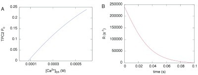 A, open probabilityPo of the TPC2-dependent Ca2+ conductance reproduced from a quadratic fit to the data reported in the literature45.B, Ca2+ release rate calculated as explained in the text, based on thePo inA.