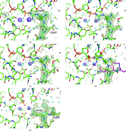 OMIT maps for detecting the cleavage of the phosphodiester bond in the (a) 0 s, (b) 25 s, (c) 40 s, (d) 60 s and (e) 230 s structures. HindIII and the DNA molecules are shown as stick models. Water molecules are shown as small cyan-coloured balls. Sodium ions in the 0 s structure and manganese ions in structures of the crystals cooled at the other time points are shown as large balls. Electron-density contours are the same as in Fig. 2 ▶. Part of the DNA structure of DA4–DA5 is omitted for the calculations.