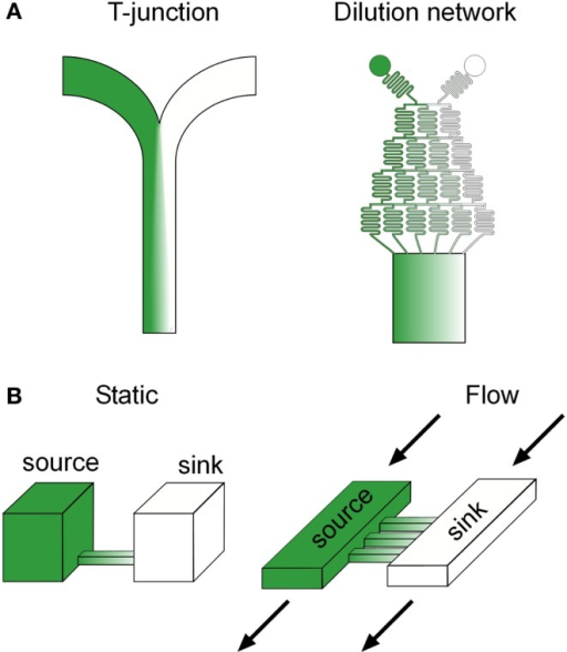 Common microfluidic gradient generation designs. (A) Flow based and diffusion based (B) microfluidic gradient generators. Green color represents the spatial distribution of a potential biochemical factor of interest in each device.