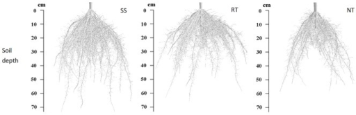 Simulated root architectures of maize at VT under three tillage managements in 2012.