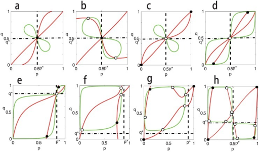 Equilibria of Eq (2) on the p − q plane and their stabilities when c1 > 0 and c2 > 0.The red curves correspond to Eq (10) and the green curves Eq (9). The intersections denoted by black spot correspond to stable equilibria of dynamics (2), and the intersections denoted by black circle correspond to unstable equilibria. Parameters are taken as: In panel a, A = [0, 1; 1, 0], B = [0, 5; 5, 0], β1 = β2 = 0.01, α1 = 1.25, α2 = 1.8, c1 = 0.25 and c2 = 0.8. In panel b, A = [0, 1; 1, 0], B = [0, 5; 5, 0], β1 = β2 = 0.01, α1 = 1.125, α2 = 0.1, c1 = 0.125 and c2 = 0.8. In panel c, A = [1, 0; 0, 1], B = [5, 0; 0, 5], β1 = β2 = 0.001, α1 = 1.4, α2 = 1.5, c1 = 0.4 and c2 = 0.5. In panel d, A = [0, 1; 1, 0], B = [5, 0; 0, 5] β1 = β2 = 0.001, α1 = 1.5, α2 = 1.2, c1 = 0.5 and c2 = 0.2. In panel e, A = [0, 5; 1, 0], B = [1, 0; 0, 5], β1 = β2 = 0.001, α1 = 1.5, α2 = 1.2, c1 = 0.5 and c2 = 0.2. In panel f, A = [0, 5; 1, 0], B = [0, 1; 5, 0], β1 = β2 = 0.001, α1 = 1.5, α2 = 1.2, c1 = 0.5 and c2 = 0.2. In panel g, A = [1, 0; 0, 5], B = [5, 0; 0, 1], β1 = β2 = 0.001, α1 = 1.4, α2 = 1.5, c1 = 0.4 and c2 = 0.5. In panel h, A = [1, 0; 0, 1], B = [2, 0; 0, 1], β1 = 0.05, β2 = 0.01, α1 = 1.75, α2 = 2, c1 = 0.25 and c2 = 0.01. The positions of p* and q* are marked by dashed lines (0 < p*, q* < 1, and note that p* and q* may not be ESS).