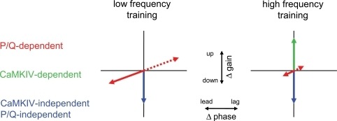 Working model of the multiple, molecularly-distinct components of motor learning in the VOR.The ordinate indicates changes in VOR gain and the abscissa indicates changes in VOR phase. A P/Q-dependent component of learning supports gain decreases linked with phase leads or gain increases linked with phase lags (red arrows). A CaMKIV-dependent component supports gain increases (green arrow). A CaMKIV- and P/Q-independent component supports gain decreases (blue arrows). The CaMKIV-dependent component (green arrows) is recruited more effectively by high-frequency training stimuli, whereas the P/Q-dependent component (red arrows) is recruited more effectively by low-frequency training stimuli.