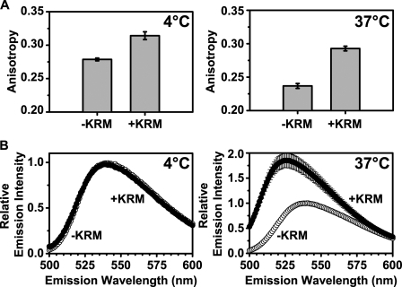 RTA259-NBD binds to microsomes differently at 4 °C and 37 °C. Anisotropy measurements (A) and emission scans (B; λex = 468 nm) of RTA259-NBD (450 nm) were performed before (-KRM) and immediately after the addition of ER microsomal membranes (+KRM; 15-20 eq) in buffer H. Emission intensity and anisotropy data were corrected by the subtraction of the signal obtained from an equivalent NBD-free RTA sample. The averages of at least three independent experiments are shown, and the error bars indicate the S.D. of the experiments.