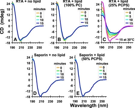 Secondary structural changes in RTA and saporin. Recordings of the far-UV CD spectra of RTA and saporin, each 5 μm in buffer C at 37 °C, in the absence or presence of 200 μm liposomes containing different percentages of PC or PS. The scans were corrected by the subtraction of blanks containing only buffer and/or liposomes. The panels show the averaged spectra of at least two experiments.