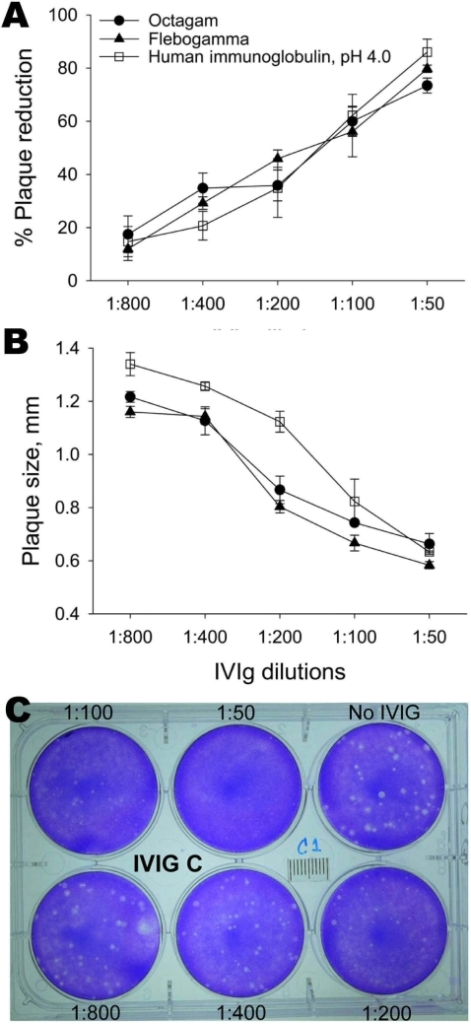 Neutralization of avian influenza virus A (H5N1) by intravenous immunoglobulin (IVIg) preparations measured by percentage reduction in plaque number (A) and plaque size (B). Monolayers of MDCK cells were infected with virus and overlaid with agar containing various concentrations of IVIg. After 2 days, plaques were detected by staining with crystal violet. Shown is a sample of viral plaques with agar overlay containing different dilutions (1:50–1:800) of Human Immunoglobulin, pH 4.0, (Harbin Sequel Bio-Engineering Pharmaceutical, Harbin, People's Republic of China) IVIg (C). Data are mean ± SE of 3 experiments.
