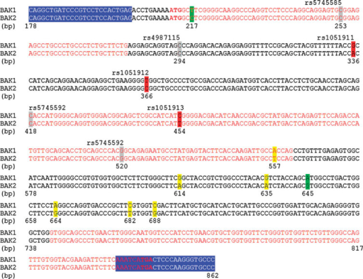 Comparison of BAK1 cDNA (NCBI reference: NM_001188.3) and BAK2 genomic sequences (NCBI reference: NG_000850). The primers used by Gottlieb et al. [2009] for the RT-PCR of BAK1 are highlighted in blue. Sequences are numbered in base pairs using the same nomenclature as Gottlieb et al. [2009]. The three nucleotides highlighted in red are the three SNPs found variant by the authors in their original article, whereas the four remaining SNPs that they cited are highlighted in gray. The nucleotides highlighted in green are the two differences between BAK1 and BAK2 cited by Gottlieb et al. [2010] in their reply to Hatchwell [2010] in order to justify the absence of amplification of BAK2. The other differences between BAK1 and BAK2, which were not mentioned by Gottlieb et al., are highlighted in yellow.