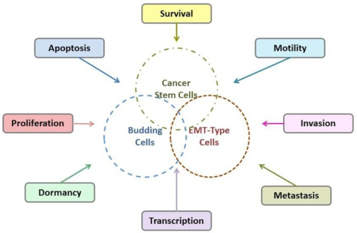 Possible interactions of tumor budding cells, EMT-type cells, and CSCs.
