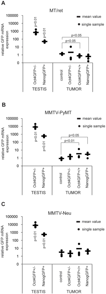 GFP mRNA is not expressed in Oct4GFP and NanogGFP transgenic MT/ret, MMTV-PyMT or MMTV-Neu tumors.Relative GFP mRNA expression levels of (A) MT/ret, (B) MMTV-PyMT and (C) MMTV-Neu compound tumors with indicated genotypes and Oct4GFP+ and NanogGFP+ testes were analysed by qPCR. For each tumor model, GFP mRNA expression levels of compound tumors and Oct4GFP+ and NanogGFP+ testes were compared to one control tumor which was set to 1. Circles represent individual samples, the bar indicates the mean value of all samples. The number of analysed samples is as follows: testes: Oct4GFP+/− n = 7, NanogGFP+ n = 5. (A) MT/ret: control n = 4, Oct4GFP+/− n = 6, Oct4GFP+/+ n = 6, NanogGFP+ n = 6 (B) MMTV-PyMT: control n = 5, Oct4GFP+/− n = 6, Oct4GFP+/+ n = 6, NanogGFP+ n = 6 (C) MMTV-Neu: control n = 5, Oct4GFP+/− n = 5, Oct4GFP+/+ n = 5, NanogGFP+ n = 9.