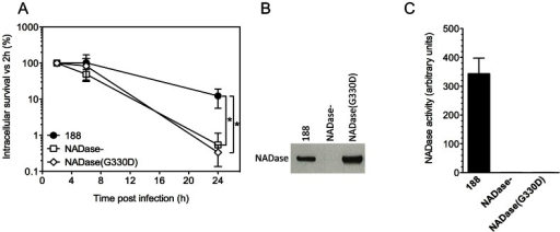 Expression of active NADase plays a central role in the intracellular survival of GAS in oropharyngeal keratinocytes.A. Intracellular survival of GAS strains 188, 188NADase-, and 188NADase(G330D). Deletion of the gene encoding NADase or inactivation of NADase by the amino acid substitution G330D resulted in a 20- to 40-fold reduction in intracellular survival compared to parent strain 188. *, P<0.001. NADase western blot (B) and activity measurements (C) of culture supernatants from GAS strains 188, 188NADase-, and 188NADase(G330D).