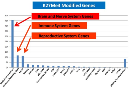 H3K27Me3 modification in the MCF-7 genome is enriched for brain, immune and reproductive genes.