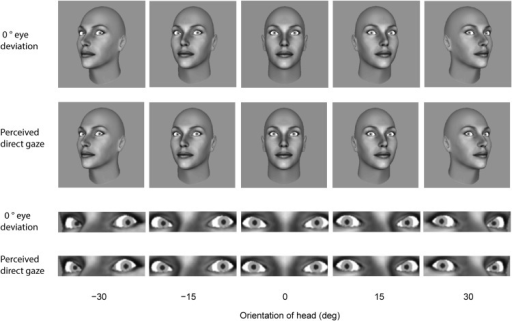Illustration of 0° eye deviation (physically direct gaze) and the eye deviation corresponding to perceived direct gaze according to the weightings computed from the mean data across subjects for each head orientation in the whole-head and the eye-region display conditions.