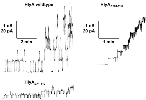 Single-channel recordings with E. coli HlyA, HlyAΔ71–110, and HlyAΔ264–286.Single-channel recordings of asolectin membranes were performed in the presence of 50 ng/ml HlyA (left side, upper trace), 50 ng/ml HlyAΔ71–110 (left side, lower trace), and 50 ng/ml HlyAΔ264–286 (right side). The aqueous phase contained 150 mM KCl (pH 6). The applied membrane potential was 20 mV; T = 20°C. The average single-channel conductance was 520 pS for HlyA, 150 pS for HlyAΔ71–110, and 320 pS for HlyAΔ264–286.