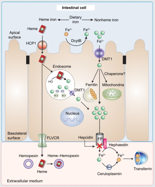 shop the immune synapse as a novel target for therapy progress in