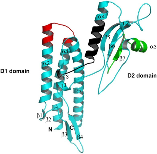 Domain organization and 3D crystal structure of FliCBp.Schematic secondary structure ribbon representation of the crystal structure of FliCBp. The N- and C-termini are labeled as are the diverse secondary structural features with α-helices in cyan and β-strands in magenta. Peptides 96–111, 213–233 and 270–288 are highlighted in red, green and black, respectively. This figure was produced using MacPymol.