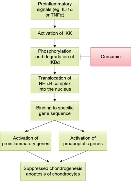 The action of curcumin on NF-κB pathway.Abbreviations: IKK, IκB kinase; IL-1α, interleukin 1 alpha; NF-κB, nuclear factor kappa-light-chain-enhancer of activated B cells; TNFα, tumor necrosis factor alpha.