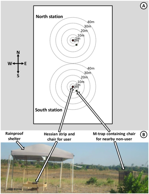 Schematic illustration of the design of experiments 1 and 2.Schematic (A) and photographic (B) illustration of the arrangement of human landing catches (HLC) by users of treated or untreated sacking strips and non-users sitting in exposure free M traps at specific randomized distances and angles at which a human baited trap was placed. The HLC captures conducted by the users of treated and untreated strips were used to quantify personal protection provided by the treated strips (Fig 1, Objective 1.1). Captures with nearby M traps occupied by participants lacking any treated or untreated strip were used to quantify the degree to which proximity to a protected strip user might decrease (Fig 1, Objective 1.2) or increase (Fig 1, Objective 1.3) biting exposure, over a range of distances varying from 2 to 40 meters. The same phenomenon was assessed at a distance of 80 meters by comparing the number of mosquitoes caught by users of untreated strips on nights when the other user at the other catching station in the same site used a treated strip with the numbers caught when the nearby strip user had an untreated strip.