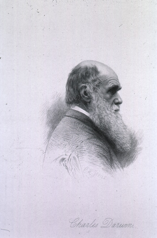 <p>Head and shoulders, right profile; as an old man.</p>