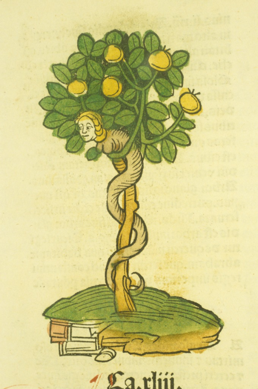 <p>Illustration of the tree of life, with a human-headed serpent wrapped around the trunk.</p>