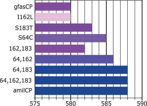 Positions of emission maxima in the mutated purple chromoprotein gfasCP in comparison to the blue amilCP.Horizontal axis is wavelength in nanometers, the bars indicate the position of the absorption peak in the mutant. The colors of the bars approximately correspond to the colors of the mutants. Mutations S64C and S183T were found to be responsible for the blue color in amilCP (numeration according to GFP). Mutation I162L results in a very slowly maturing protein, hence pale color of the corresponding bar. This effect is rescued by any of the other two mutations.