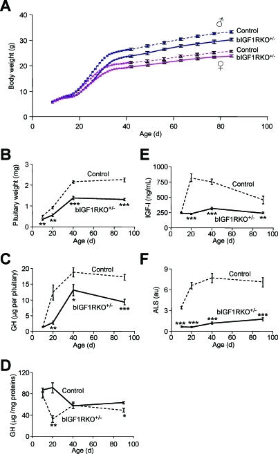 Growth and Postnatal Development of the Somatotropic Axis in Mutant and Control Mice(A) bIGF1RKO+/− mice had significantly delayed growth, from age 18 d onwards.(B) bIGF1RKO+/− pituitaries were small from age 10 d onwards (n = 10 per group).(C) Pituitaries from mutants contained little GH (n = 5 per group).(D) Data from (C) expressed per milligram of pituitary protein revealing a selective drop at age 20 d.(E) In control mice, serum IGF-I increased rapidly after age 10 d (in response to endogenous GH), but remained low in bIGF1RKO+/− mice.(F) Similar to IGF-I (E), the postnatal surge of ALS in controls was absent from bIGF1RKO+/− mice (n = 5 per group).