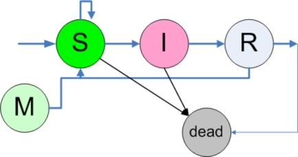 The finite state automaton working in each individual. For more information see text. (Arrow from R to M)