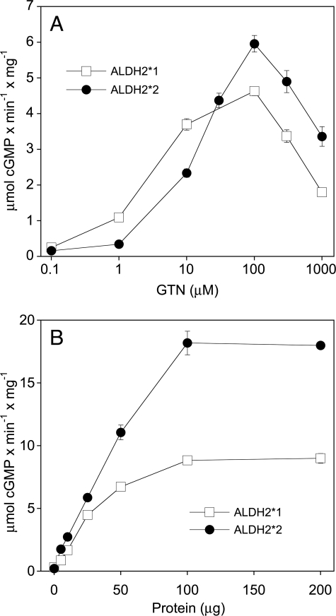 "Dependence of sGC activation on GTN (A) and ALDH2 (B) concentration. Purified sGC (50 ng) was incubated at 37 °C for 10 min in the presence of 0.5 mm [α-32P]GTP (∼250 000 cpm), 3 mm MgCl2, 1 mm cGMP, 2 mm DTT and 0.1 mm DTPA. A: Activation of sGC by increasing concentrations of GTN in the presence of ALDH2*1 or ALDH2*2 (25 μg each). B: Activation of sGC by 0.1 mm GTN in the presence of the indicated amounts of ALDH2*1 or ALDH2*2. [32P]cGMP was isolated and quantified as described in ""Experimental Procedures"". Data are mean values ± S.E. of three independent experiments."