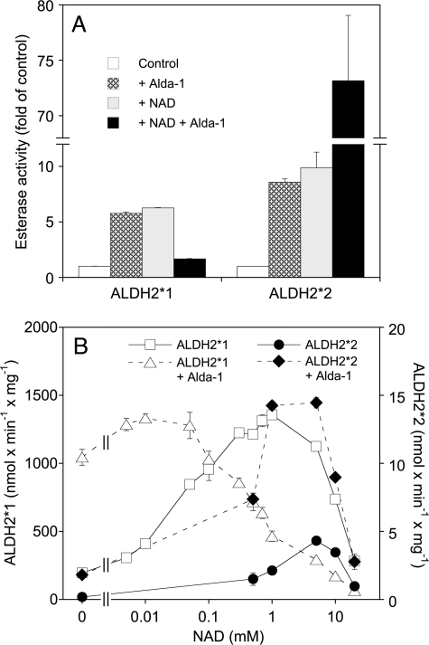 "Effect of Alda-1 and NAD on the esterase activities of ALDH2*1 and ALDH2*2. Esterase activity was measured photometrically with 0.1 mm p-NPA as described in ""Experimental Procedures"" in the absence or presence of 1 mm (A) or increasing concentrations (B) NAD and 10 μm Alda-1 or 0.5% DMSO (vehicle control). Activities were calculated as fold increase over controls (mean values ± S.E.) obtained in three independent determinations. Note that the control value of ALDH2*2 is only 0.11% of the ALDH2*1 control."
