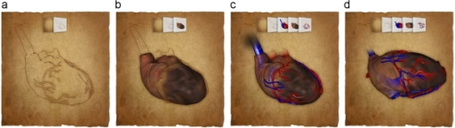 Generation of a 3D illustration of the human heart: (a) line drawing layer; (b) combination with muscle layer; (c) applying masking; and (d) after rotation.
