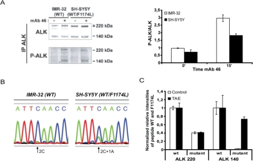 ALKWT and ALKF1174L expression and phosphorylation in the SH-SY5Y neuroblastoma cell line.A. IMR-32 (WT) and SH-SY5Y (WT/F1174L) cells were untreated or stimulated with 6 nM agonist mAb 46 for 15 min. ALK immunoprecipitates were immunoblotted with polyclonal anti-ALK (REAB) and antiphosphotyrosine (4G10 platinium). Right panel: Quantification of the ratio P-ALK/ALK in IMR-32 and SH-SY5Y cells, results are expressed in mean and s.e.m. B. Total RNA of IMR-32 (WT) and SH-SY5Y (WT/F1174L) were extracted and cDNA were obtained by reverse transcription. Sequencing chromatograms of the cDNAs obtained after RT-PCR are shown. C. SH-SY5Y cells (WT/F1174L) were treated or not with the ALK specific tyrosine kinase inhibitor NVP-TAE684 at 50 nM for two days. After ALK immunoprecipitation proteomics analysis and quantifications of interested peptides (carrying or not the mutation spot) were done by ESI-MS, after normalization.