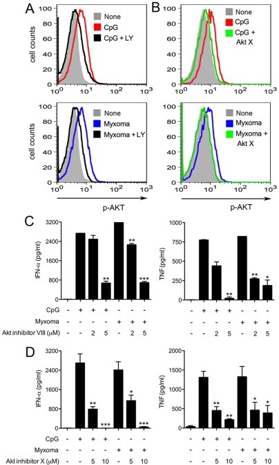 Akt inhibitors VIII and X block the induction of IFN-α and TNF in human pDCs by myxoma virus.(A, B) Human pDCs were cultured with CpG2216 (10 μg/ml), or infected with myxoma virus (MOI = 10), and were then treated with or without LY294002 (10 μm) or Akt inhibitor X (10 μm) for 90 min (CpG) or 8 h (Myxoma). Cells were stained with Alexa Fluor 647 anti-human AKT antibody that recognizes phospho-S473, and analyzed by flow cytometry. The results shown are representative of three separate experiments. (C, D) pDCs (2×105)were stimulated with CpG2216 (10 μg/ml), or infected with myxoma virus (MOI = 10), and were then treated with or without Akt inhibitors VIII (C), or X (D) at indicated concentrations. Supernatants were collected at 20 h post treatment and measured for IFN-α and TNF concentrations by ELISA. The values shown are averages of triplicate means (± SEM) of three independent experiments using human pDCs isolated from three different donors (*, p<0.05; **, p<0.01; ***, p<0.001).