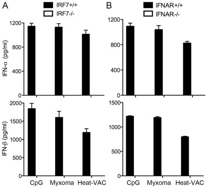 Heat-VAC induced production of type I IFN is dependent on IRF7 and IFNAR1.Purified murine pDCs were obtained using FACS from Flt3L-BMDCs generated from IRF7−/− (A), IFNAR1−/− (B) mice and age-matched WT controls. pDCs (2×105) were stimulated with CpG, or infected with myxoma virus at a MOI of 10, or with an equivalent amount of Heat-VAC. Supernatants were collected at 22 h post infection. The concentrations of IFN-α/β were determined by ELISA. Data are means ± SEM. The combined results of three independently performed experiments are shown.