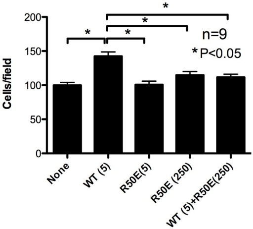 R50E suppresses WT FGF1-induced endothelial cell migration.Lower side of the filter in the modified Boyden chamber was coated with fibronectin (10 µg/ml). The lower chamber was filled with serum-free medium with WT FGF1 (5 ng/ml) or the mixture of WT FGF1 and excess R50E (5 and 250 ng/ml, respectively). HUVECs were plated on the filter and incubated for 6 h. Chemotaxed cells were counted from the digital images of the stained cells. Data is shown as means +/− SE per field. Statistical analysis was done by one-way ANOVA plus Tukey analysis.