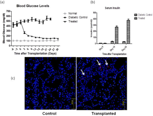 Functional analysis after SDF-1α preconditioned IPCs transplantation in  vivo. a) Blood glucose