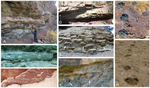 Track occurrence in the Tremp Formation.(A–D) Underneath views of overhanging ledges in the Iscles-3, Cingles del Boixader, La Mata del Viudà, and Masia de Ramon Petjades localities, respectively. (E and F) Cross-sectional outcrop views in the La Pleta Nord and Serraduy Sur localities, respectively. (G and H) Plan view outcrops in the Areny 1 and La Llau de la Costa localities, respectively. Scale bar: 15 cm; hammer length is about 33 cm. Arrows indicate the position of some tracks.