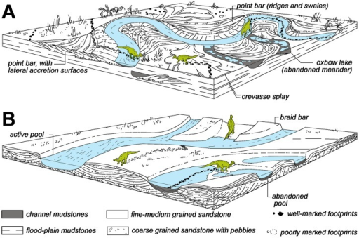 Sedimentary reconstruction of hadrosaur track production in fluvial settings of the Tremp Formation.(A) Sedimentary environments in meandering streams. (B) Sedimentary environments in braided streams.