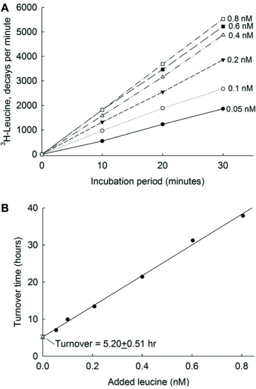 Leucine uptake kinetics in Atlantic Ocean.(A) Incorporation into bacteria of 3H-leucine at 6 nM concentrations. (B) The relationships between added amino acid concentrations and their corresponding turnover times. The error bars show single standard errors. The Y-axis intercept of the regression line is an estimate of turnover time at maximum bioavailable ambient concentration of amino acids. From Zubkov et al. (2008) with permission.