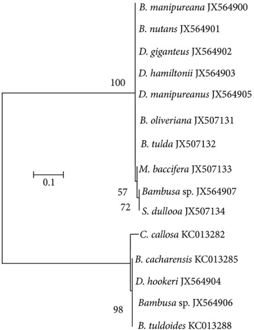 A maximum likelihood tree based on Hasegawa et al. [20] nucleotide substitution model. The tree is drawn to scale, with branch lengths measured in the number of nucleotide substitutions per site. Evolutionary analyses were conducted in MEGA5 [21].