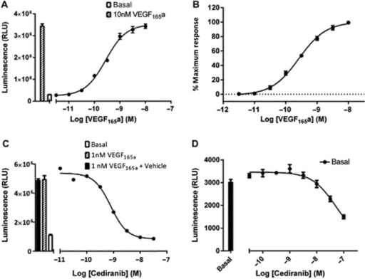 The effect VEGF165a on NFAT-mediated gene transcription in VEGFR2 NFAT cells. VEGFR2 NFAT cells were treated with VEGF165a (A and B) or cediranib +1 nM VEGF165a (C). Data are mean ± SEM from quadruplicate determinations in a single representative experiment that was repeated on five separate occasions (A and C). Normalized data from five repeat experiments expressed as a percentage of the response to 10 nM VEGF165a in each experiment (B). Effect of cediranib on basal NFAT-luciferase activity (D). Data are mean ± SEM from quadruplicate determinations in a single representative experiment that was repeated on five separate occasions. The histogram in (A) and (C) show the control response to 1 nM VEGF165a (A and C) and that to VEGF165a in the presence of the vehicle (containing DMSO) for the highest concentration of cediranib used in the competition experiment shown in (C).