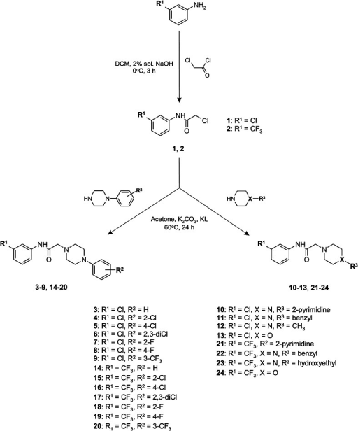 Synthetic pathways of intermediates 1, 2 and target compounds 3–24