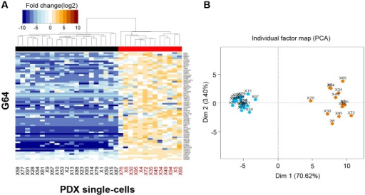 Heat map combined with the hierarchical clustering analysis of G64 expression in the 34 single cells.(A) The 34 single cells were clustered into two subgroups (i.e., single cells displaying G64 down-regulation [left] and single cells displaying G64 up-regulation [right]). See also the dendrogram and black and red flat bars at the top of the heat map. The single cells displaying G64 up-regulation are labeled 'red' at the bottom of the heat map to ensure that the single cells exhibiting up-regulated G64 expression could be compared with the single cells shown in the other figures. (B) Principal component analysis of G64 expression in the 34 single cells (see the Materials and Methods section). The same subgroups shown in (A) were clustered. Blue and orange dots represent single cells exhibiting G64 down- and up-regulation, respectively.