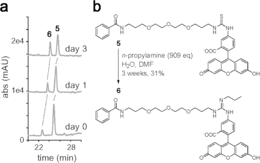 Reactivity of thiourea with amine.(a) Time course analysis of the reaction converting compound 5 to 6. Compound 5 was incubated with n-propylamine (3473 eq) and analyzed by LC-MS. UV chromatograms at 488 nm are shown. (b) Chemical structures of model compounds 5 and 6. The thiourea compound 5 was converted to the guanidine compound 6 in the presence of excess n-propylamine.