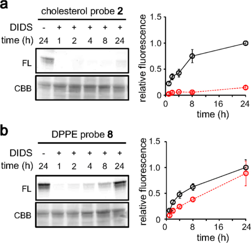 Competitive tagging of band 3 by lipid probes.Erythrocytes were pre-treated with a transporter inhibitor DIDS (100 μM) for 30 min, then time-dependent tagging was examined using the cholesterol probe 2 (a) or the DPPE probe 8 (b). The concentration of the probes was 400 nM. The fluorescence intensities relative to that obtained after 24 h incubation in the absence of DIDS are shown. The tagging level in the absence (black solid line, Figures S2 and S4) or in the presence (red dashed line) of DIDS is shown. Means ± SD of 3–6 experiments are shown.