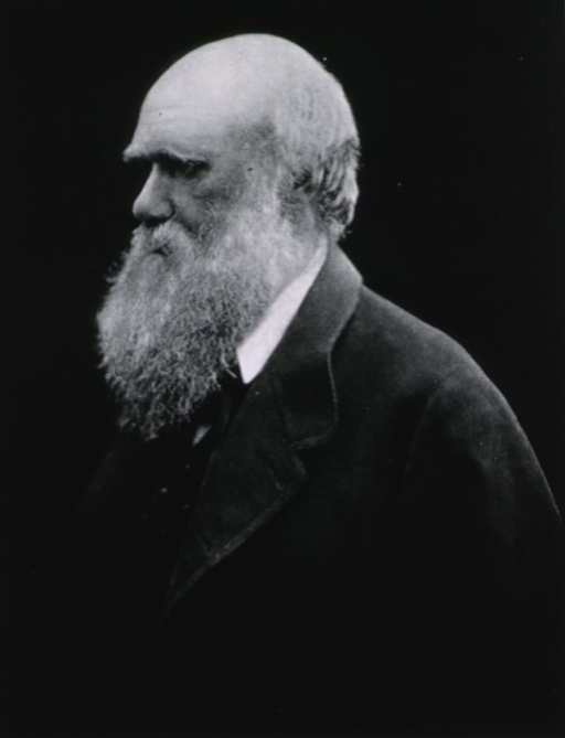 <p>Half-length, left profile; as an old man with beard, wearing heavy coat.</p>