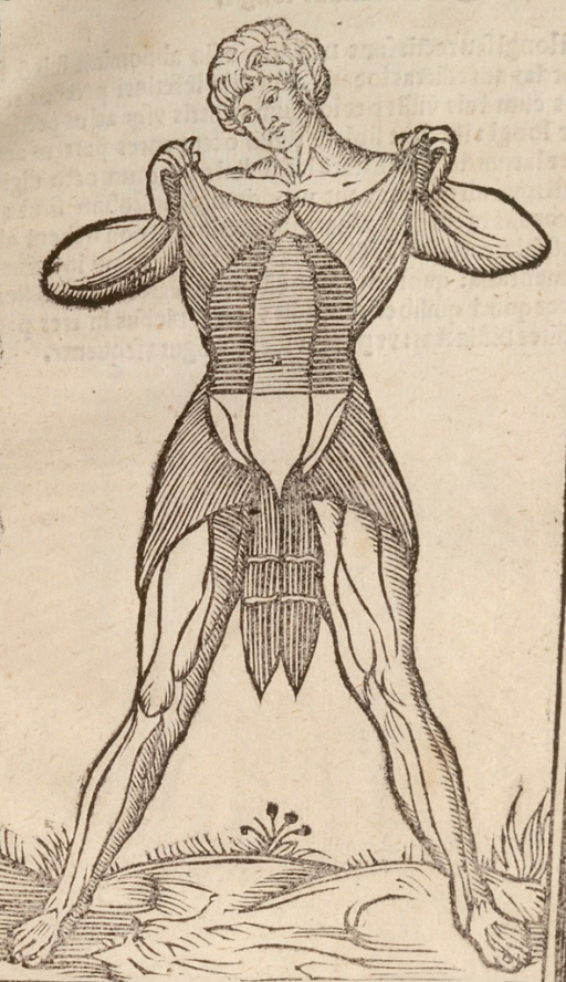 <p>Front view of a standing man, whose upper body skin is flayed; the man holds up the flayed skin to expose his abdominal muscles.</p>