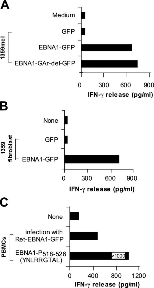 Natural processing and presentation of EBNA1 to M3-W1-B9 CD8+ T cells. (A) Recognition of full-length EBNA1-transfected 1359mel cells by M3-W1-B9 T cells. 1359mel cells were transfected with 200 ng EBNA1-GFP or EBNA1-GAr-del-GFP plasmid DNAs using LipofectAMINE. IFN-γ release was determined as described in Fig. 1. (B) Recognition of 1359 fibroblasts transfected with EBNA1-GFP by M3-W1-B9 T cells. 1359 fibroblasts were transfected with EBNA1 plasmid DNA by electroporation. T cell assays were performed at an E/T ratio of 2:1. (C) T cell recognition of autologous PBMCs infected with retroviral/EBNA1-GFP.