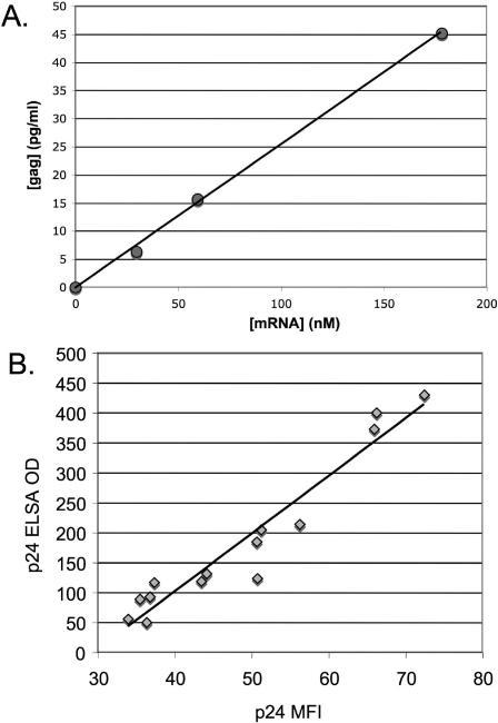 Gag expression in Jurkat cells transfected with gag mRNA.A. Gag production correlates with mRNA concentration. Jurkat cells were transfected by electroporation with increasing doses of synthetic codon-optimized gag mRNA. After 24 hours, the amount of Gag in the supernatant was determined by ELISA. The line shows linear fit (R2>0.99). B. The amount of Gag in cell supernatants is representative of the median Gag production in electroporated cells. Jurkat cells were transfected with varying doses of gag mRNA; after 24 hours, cell supernatants were harvested for ELISA, and cell pellets were fixed, permeabilized, and stained with anti-Gag/p24 antibody. Gag production as measured by ELISA is shown on the Y axis; Gag production as measured by MFI (median fluorescence intensity) is shown on the X axis. Line shows linear fit (R2 = 0.93). ELISA values are the average of triplicate wells.