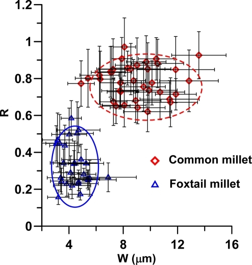 Bivariate biplot of R and W values of measurements from epidermal long cells of both species (P. miliaceum and S. italica).
