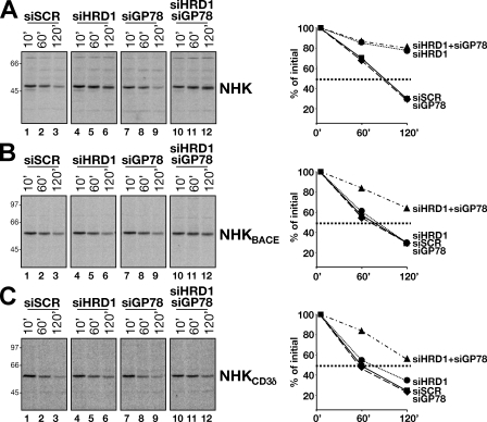 Involvement of HRD1 and GP78 in disposal of soluble and membrane-tethered NHK variants. (A) Radiolabeled NHK was immunoisolated after the indicated chase times from cells expressing a scrambled siRNA (siSCR; lanes 1–3), an siRNA targeting HRD1 (siHRD1; lanes 4–6), GP78 (siGP78; lanes 7–9), or both HRD1 and GP78 (siHRD1/siGP78; lanes 10–12). Relevant bands were quantified and plotted. (B and C) Same as described in A for NHKBACE and NHKCD3δ, respectively. Molecular mass markers are shown on the left for all gels (given in kilodaltons).